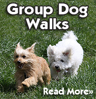 Group Dog Walks